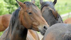 CAV Pferdefreunde Herde