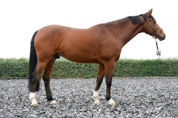 CAV Pferdegewicht 4