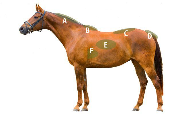 CAV Pferdegewicht 6
