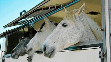 CAV Pferdehänger Pferd Schimmel