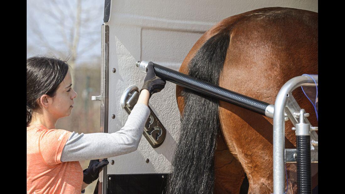 CAV Pferdehänger Pferd verladen 12