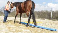 CAV Pferdehänger Pferd verladen 3