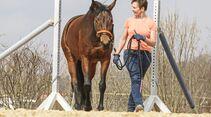 CAV Pferdehänger Pferd verladen 4