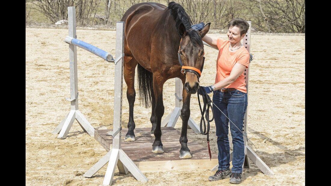 CAV Pferdehänger Pferd verladen 6