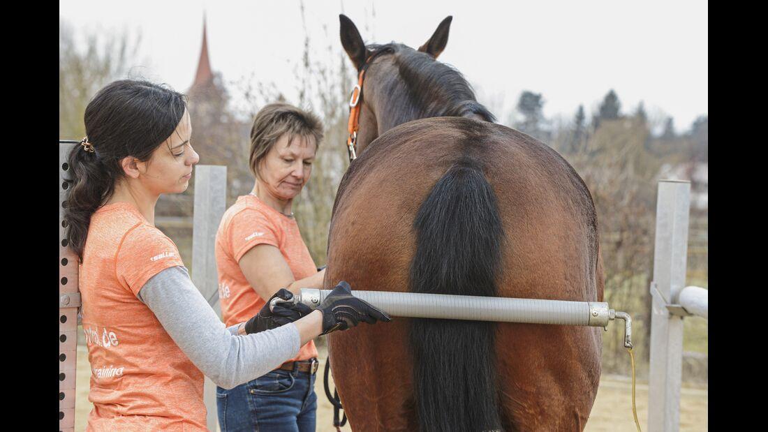 CAV Pferdehänger Pferd verladen 7
