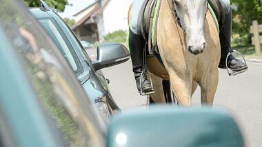 CAV Pferdehaftpflicht