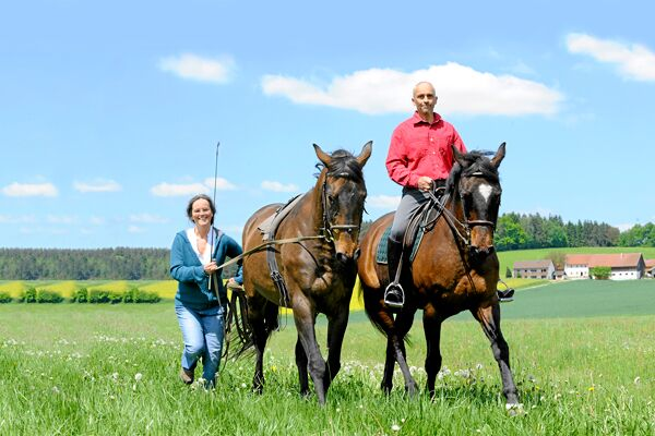 CAV Pferdekenner Knut Krüger Training Verhalten 1
