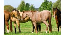 CAV Pferdekenner Knut Krüger Training Verhalten 10