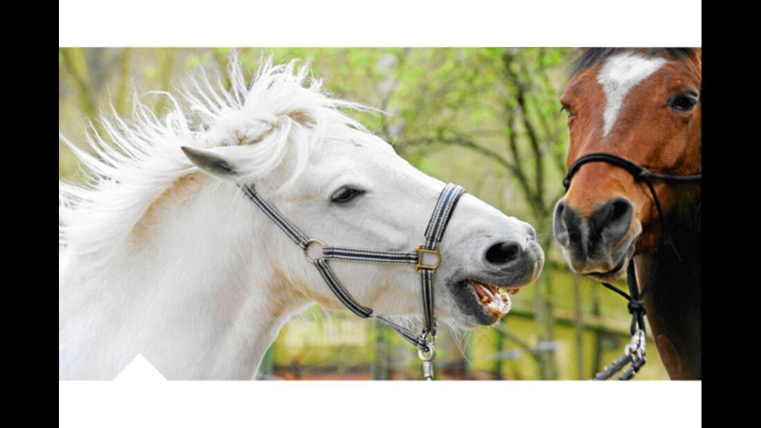 CAV Pferdekenner Knut Krüger Training Verhalten 12
