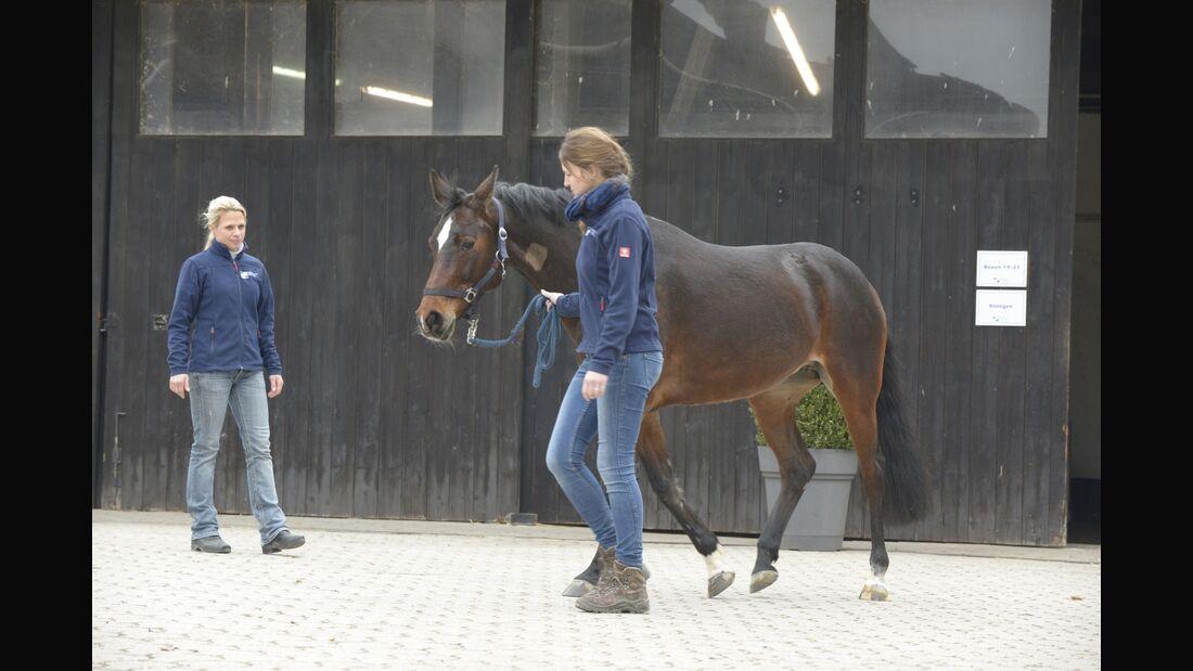 CAV Pferdeklinik Aschheim