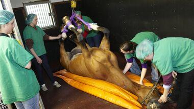 CAV Pferdeklinik Klinik Op Boening Kehlkopf