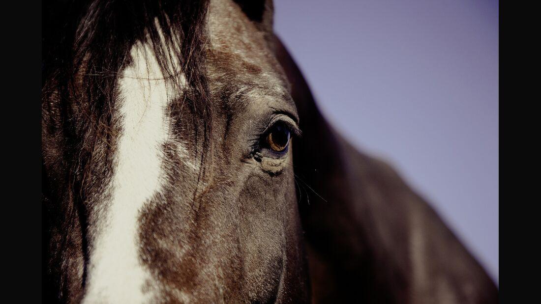 CAV Pferdekopf und Pferdeauge