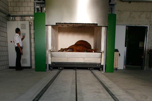 CAV Pferdekrematorium 6