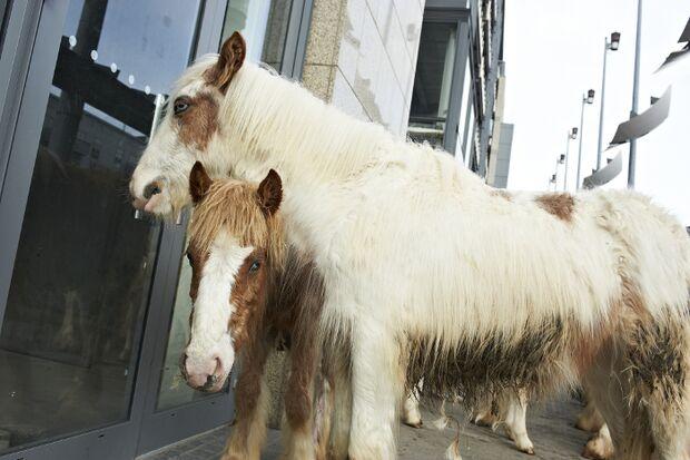 CAV Pferdemarkt Dublin