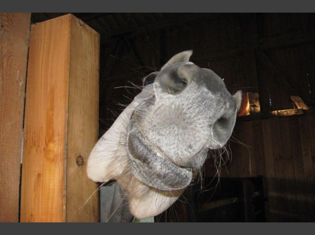 CAV Pferdenasen Nüstern Leserfotos Traudl Nern