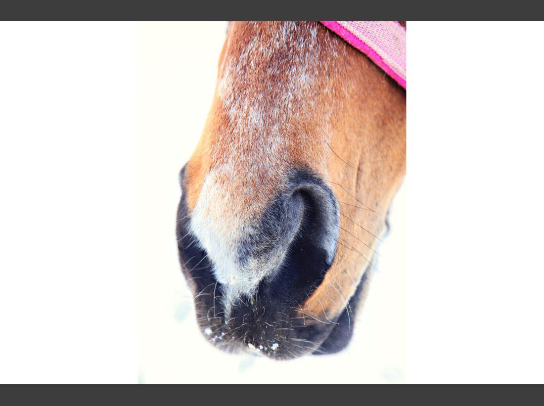CAV Pferdenasen Nüstern Nase Leserfotos Jelena Beketic