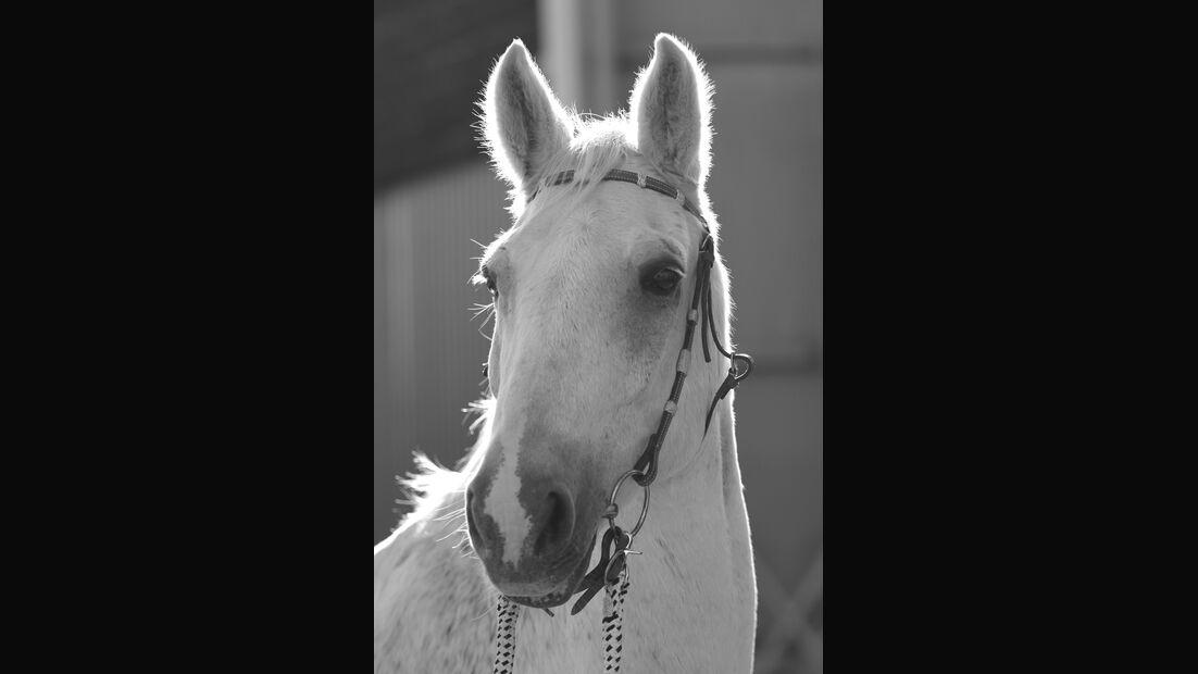 CAV-Pferdeohren-Anja-Jennessen