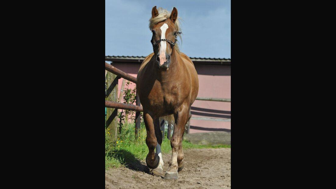 CAV-Pferdeohren-Katharina-Roepnack