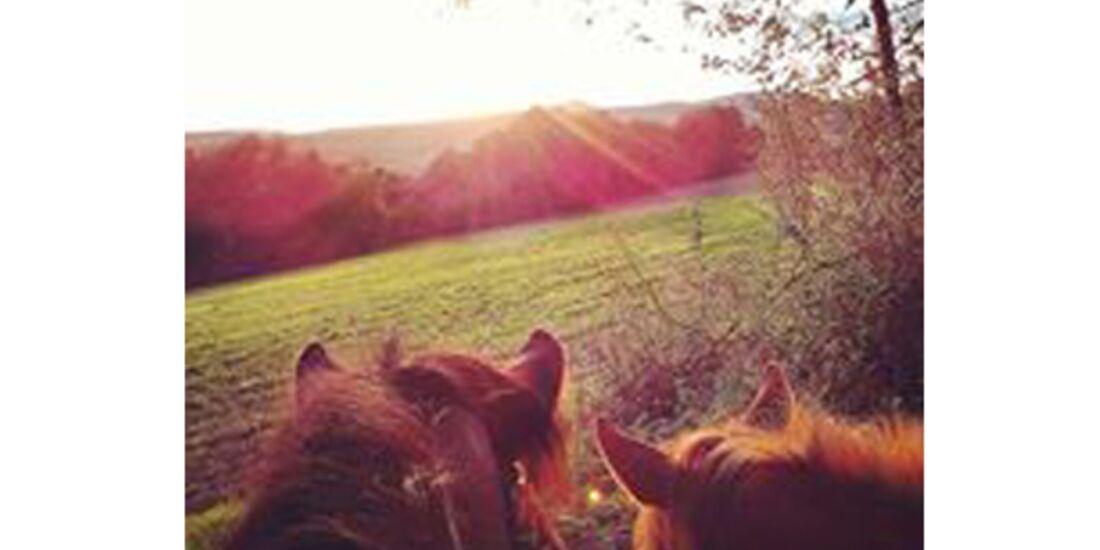 CAV Pferdeohren Leserfotos 35