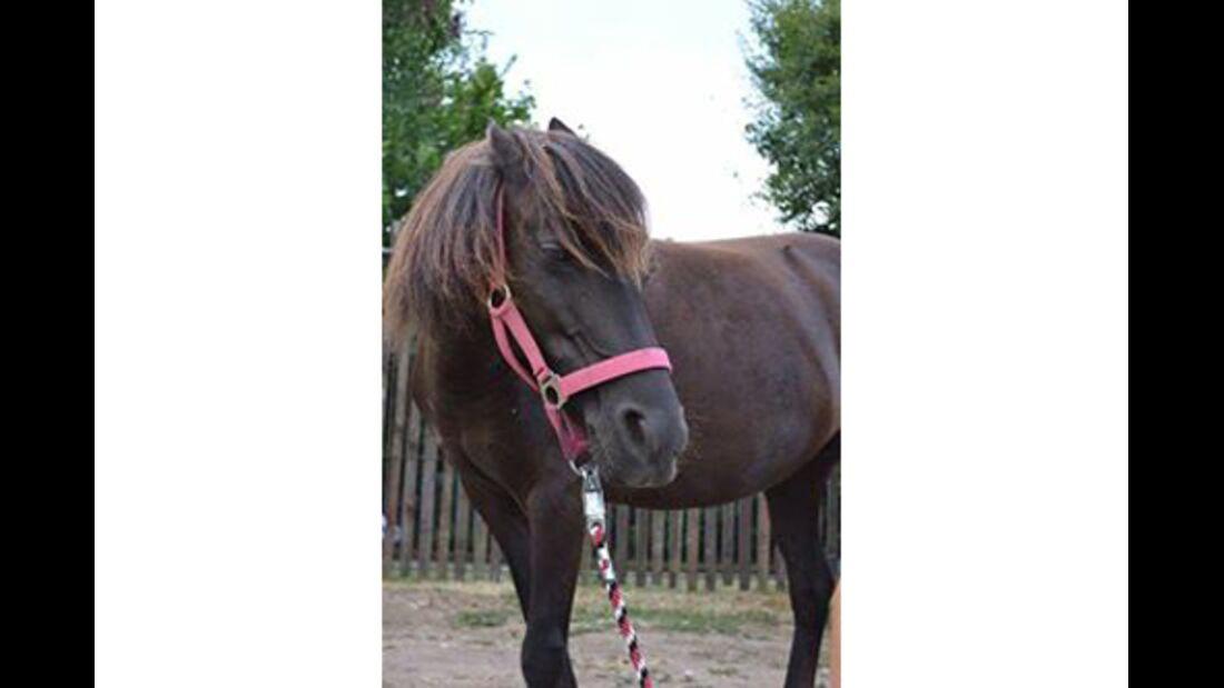 CAV Pferdeohren Leserfotos 37