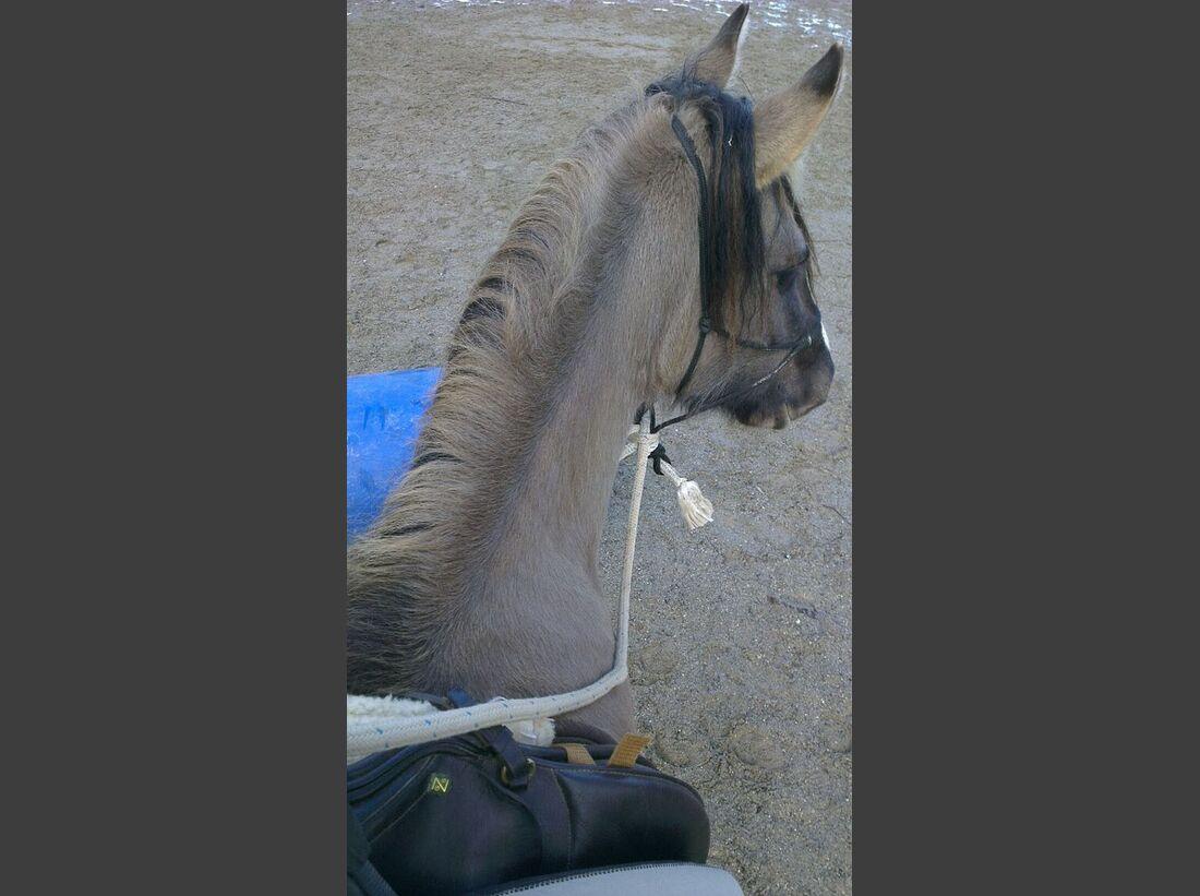 CAV-Pferdeohren-Regina-Huber