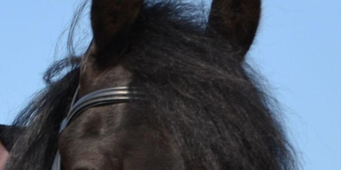 CAV-Pferdeohren-Tanja