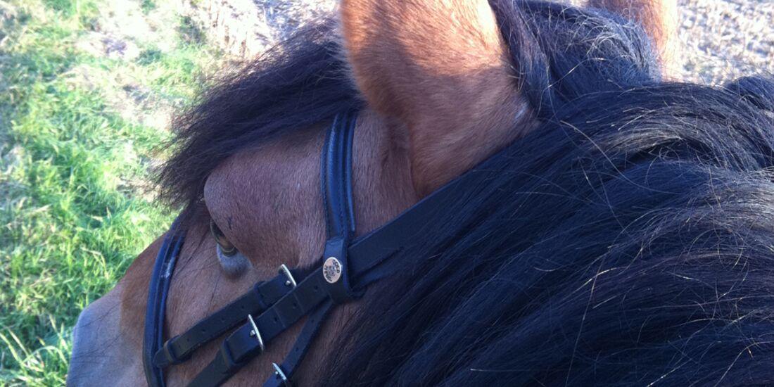 CAV-Pferdeohren-Tina-Dradrach