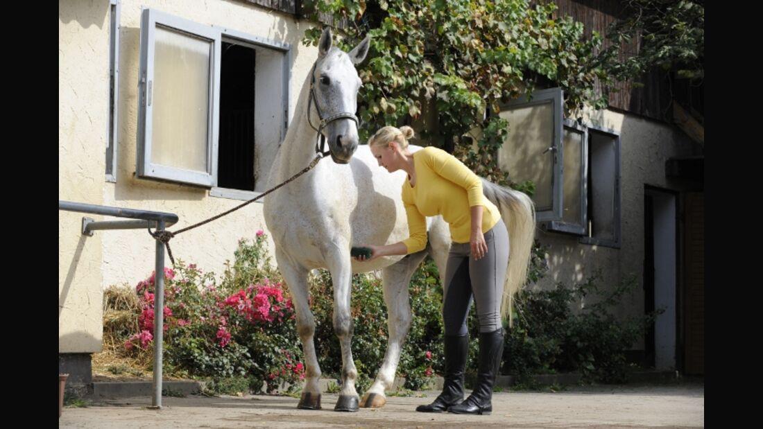 CAV Pferdepflege Pflege Putzen Schimmel