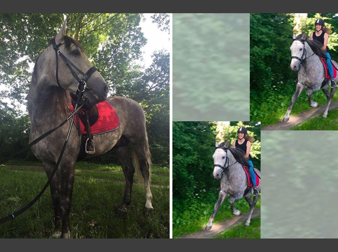 CAV Pferderassen Marie