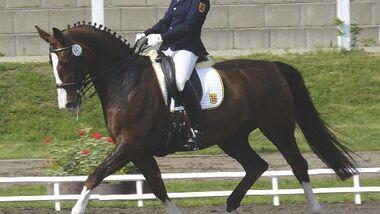 CAV Pferdeschänder Missbrauch  Bild 1