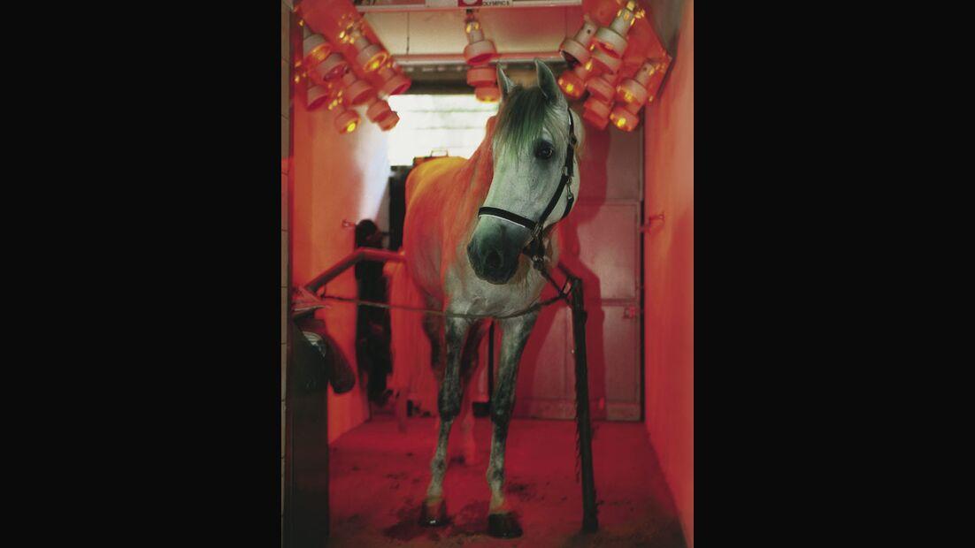 CAV Pferdesolarien - Pferd in Wärmebox