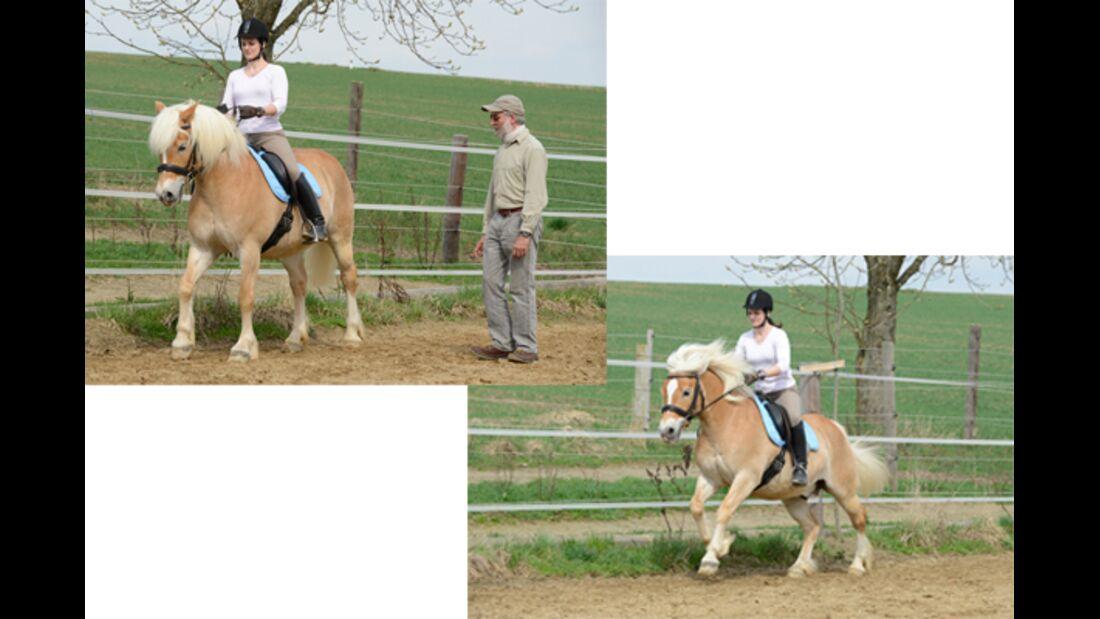CAV Pferdetausch 10