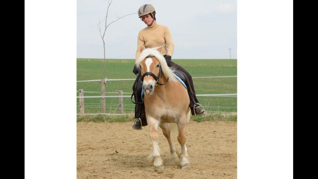 CAV Pferdetausch 12