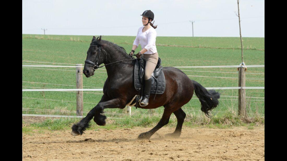 CAV Pferdetausch 4