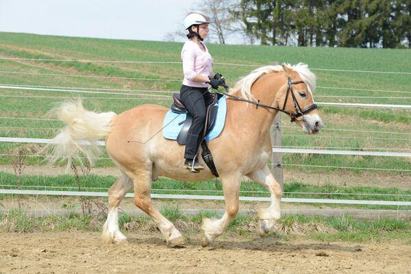 CAV Pferdetausch 5