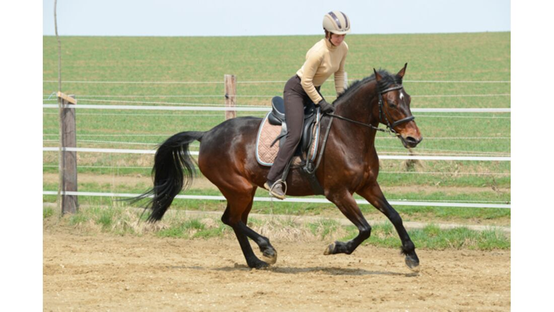 CAV Pferdetausch 6