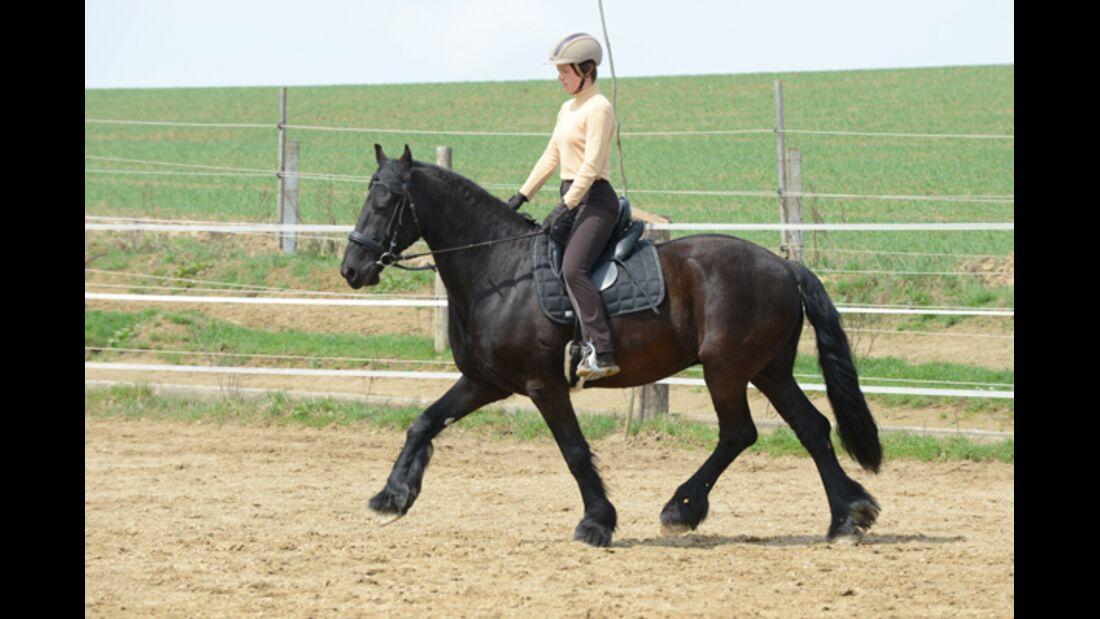 CAV Pferdetausch 9