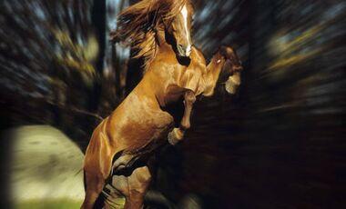 CAV Pferdeträume