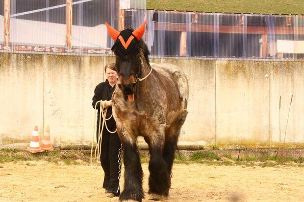 CAV Pferdezungen Anja Knischewski