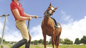 CAV Platzsaure Pferde