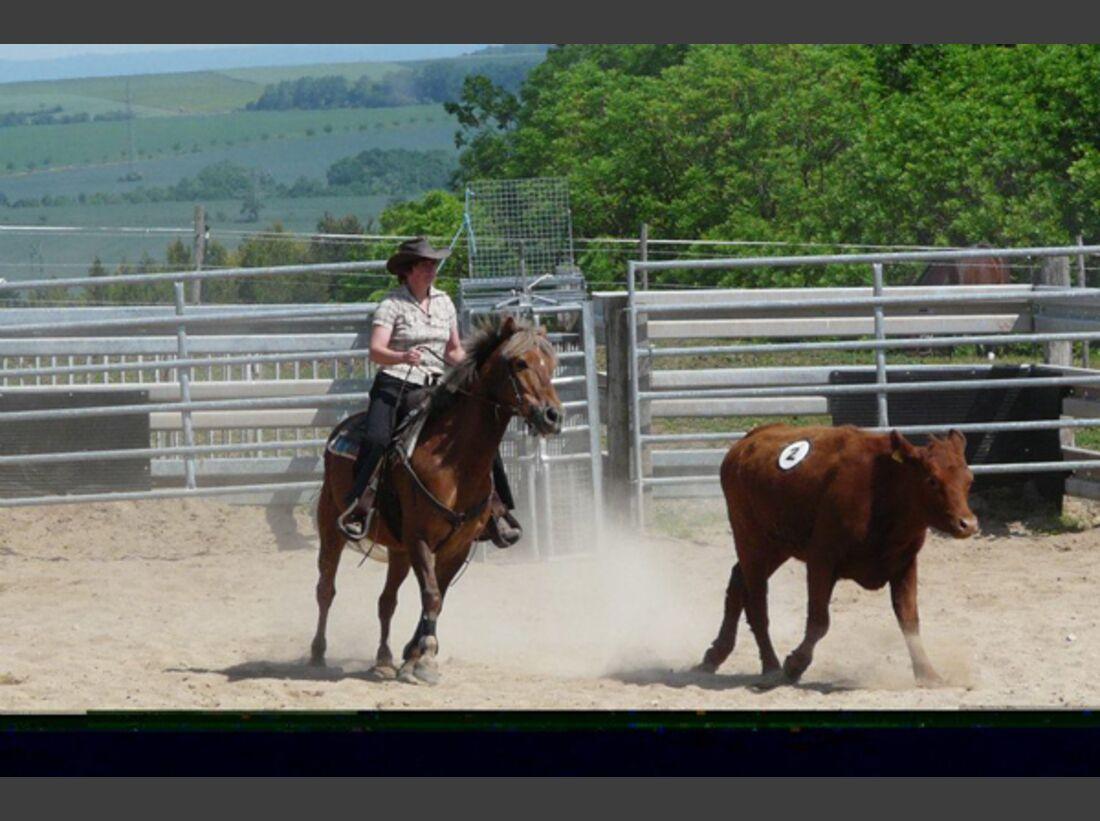 CAV Pony Leserfotos 19