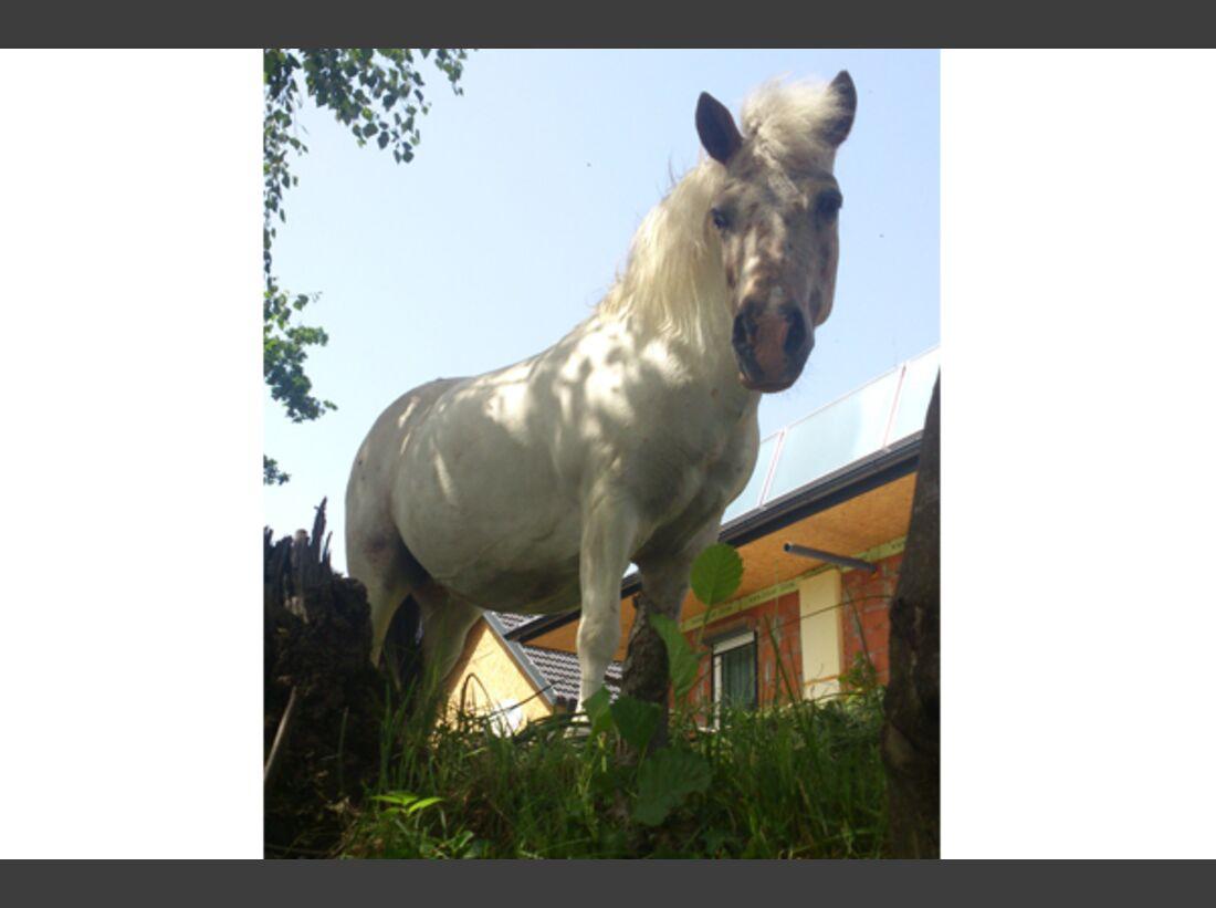 CAV Pony Leserfotos 22