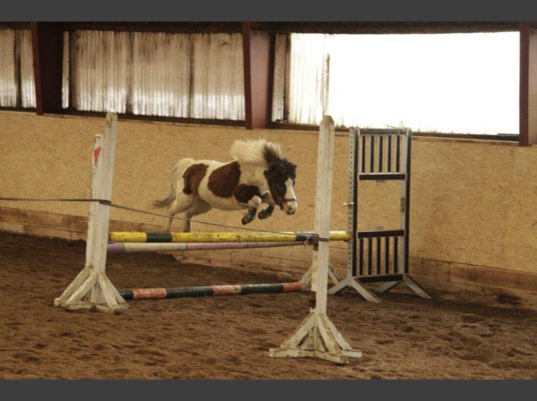 CAV Pony Leserfotos 29