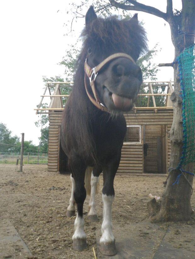 CAV Pony Pferdefotos