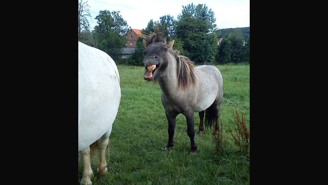 CAV Pony Schräge Pferdefotos