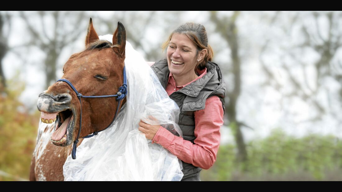 CAV Pony of the Americas POAs