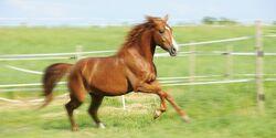 CAV Recht für Reiter Pferderecht