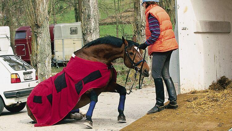Sturz Pferd Schwangerschaftsdiabetes