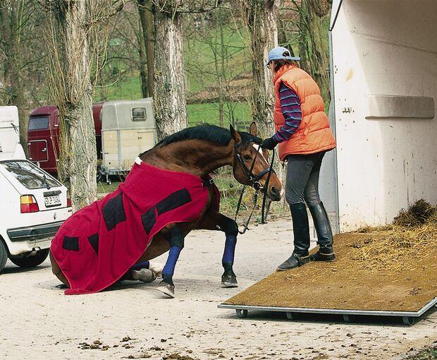 CAV Rechtserie 091008 Pferd Unfall Lebendversicherung
