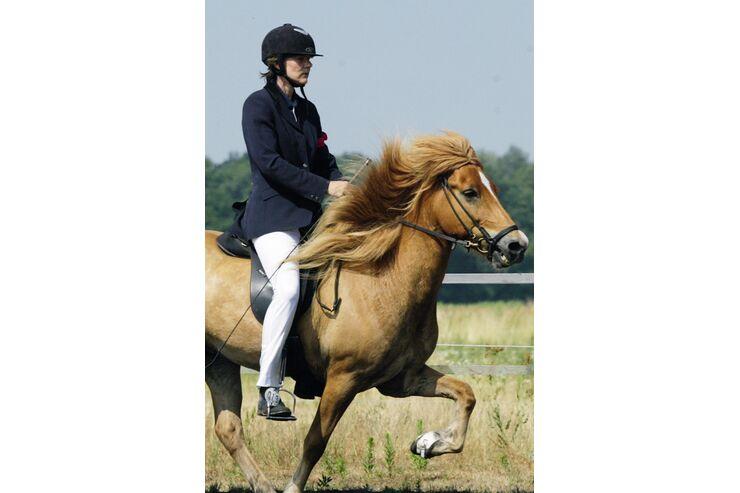 Cavallo kleinanzeigen er sucht sie